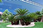 Euroflora 2011 news espositori numeri finali e fotografie - Palme nane da giardino ...