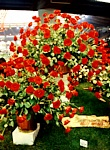 "EUROFLORA 1996 - Composizione rose ""Rosso Antibes"""