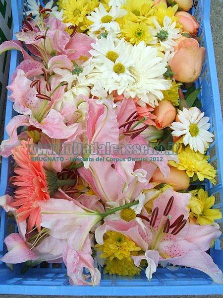 Infiorata del corpus domini 2012 tipi di fiori utilizzati for Tipi di fiori